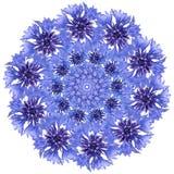 Mandala de fleur Conception circulaire bleue de bleuet photo libre de droits