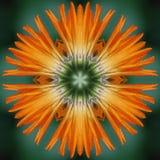 Mandala de fleur de Calendula Photos libres de droits