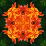 Mandala de fleur de lis Images libres de droits