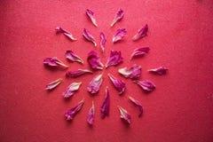 Mandala de pétales de pivoine Images stock