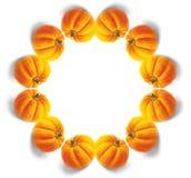Mandala della zucca Fotografie Stock Libere da Diritti