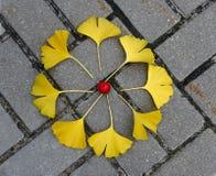 Mandala di autunno Fotografie Stock