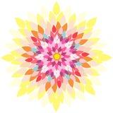 Mandala-flor Fotografia de Stock Royalty Free