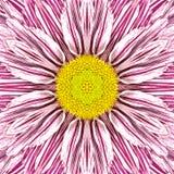 Mandala Flower branca com listras roxas e centro amarelo foto de stock