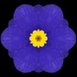 Mandala Flower Kaleidoscope Isolated azul en negro Foto de archivo