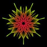 Mandala Flower, la geometria sacra Fotografia Stock