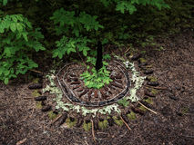 Mandala in the forest Stock Photos