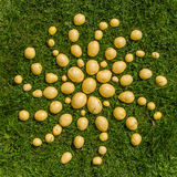 Mandala of fresh potatoes Stock Photo