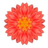 Mandala Gerbera Flower Kaleidoscope Isolated auf Weiß Lizenzfreies Stockfoto