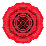 Mandala Rose Flower Kaleidoscope Isolated op Wit Royalty-vrije Stock Afbeeldingen
