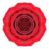 Mandala Rose Flower Kaleidoscope Isolated on White Royalty Free Stock Images