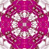 Fuchsia pattern with mandala spring kaleidoscope style in pink colors and white rays Royalty Free Stock Photos
