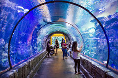 Mandalay bay aquarium Stock Images