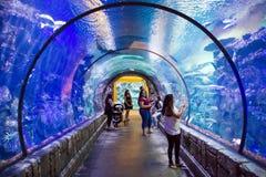 Mandalay bay aquarium. The Shark Reef Aquarium at Mandalay Bay hotel and casino in Las Vegas stock images