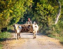 Mandalay - December 2: Landbouwer die op het gebied werken Stock Foto