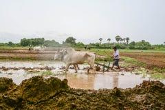 MANDALAY, MYANMAR - 31 JULI 2015: De landbouwers in Mandalay, Myanmar, planten rijst op het overstroomde gebied Stock Fotografie
