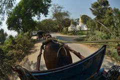 Mandalay Oe Toke Tan pony cart taxi. Myanmar Mandalay Oe Toke Tan pony cart taxi stock image