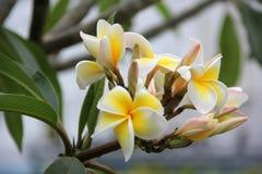 Mandando a fragrância das flores Fotografia de Stock