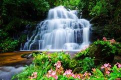 Mandang瀑布,泰国,花 库存图片