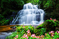 Mandangwaterval, Thailand, bloem Stock Afbeelding