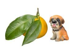 Mandarín con hojas grandes y un perro foto de archivo libre de regalías
