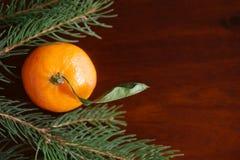 Mandarín entre ramas de árbol de navidad Fotos de archivo libres de regalías