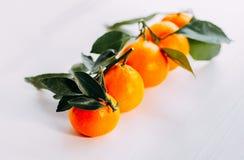 Mandarín fresco anaranjado maduro en un fondo blanco Cinco mandarinas con verde en un fondo blanco imagen de archivo