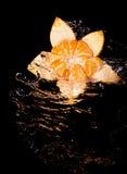 Mandarín y agua Foto de archivo