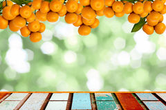 mandarijnbomen Stock Afbeelding