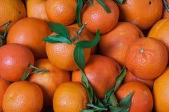 mandarijnen Stock Foto's