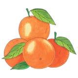 mandarijnen Royalty-vrije Stock Foto's