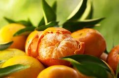 mandarijnen, gepelde mandarijn Stock Foto's