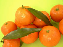 Free Mandarin Stock Photo - 1685900