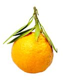 Mandarin. Stock Photography