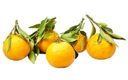 Mandarin. Royalty Free Stock Photos