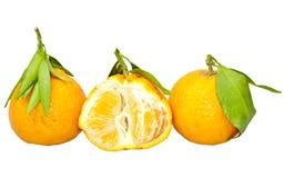 Mandarin. Stock Images