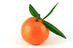Mandarin Royalty-vrije Stock Fotografie