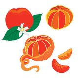 mandarin stock illustrationer