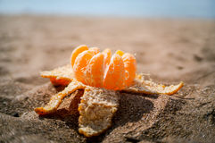 Mandarin on the beach sand royalty free stock image