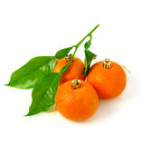 Mandarin Christmas decoration Stock Images