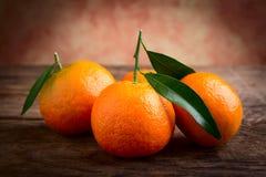 Mandarin citrus fruits Stock Photo