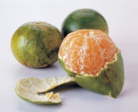 Mandarin citrusvrucht stock foto