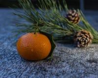 Mandarin close up in the light of winter evening Royalty Free Stock Photos