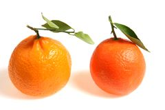 Mandarin comparison. Two varieties of mandarin (small loose-skinned) oranges side by side for comparison. A tangerine is on the left and a clementine on the royalty free stock photos