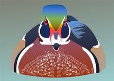 Mandarin duck flouting on river. Mandarin colorful duck flouting on river royalty free illustration