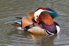 Mandarin eend op een vijver 3 stock foto's