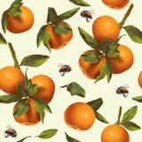 Mandarin fruit pattern Royalty Free Stock Image