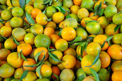 Mandarin fruits Royalty Free Stock Image