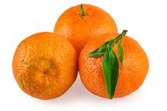 Mandarin Fruits Isolated on White Stock Image