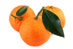 Mandarin Fruits Royalty Free Stock Images